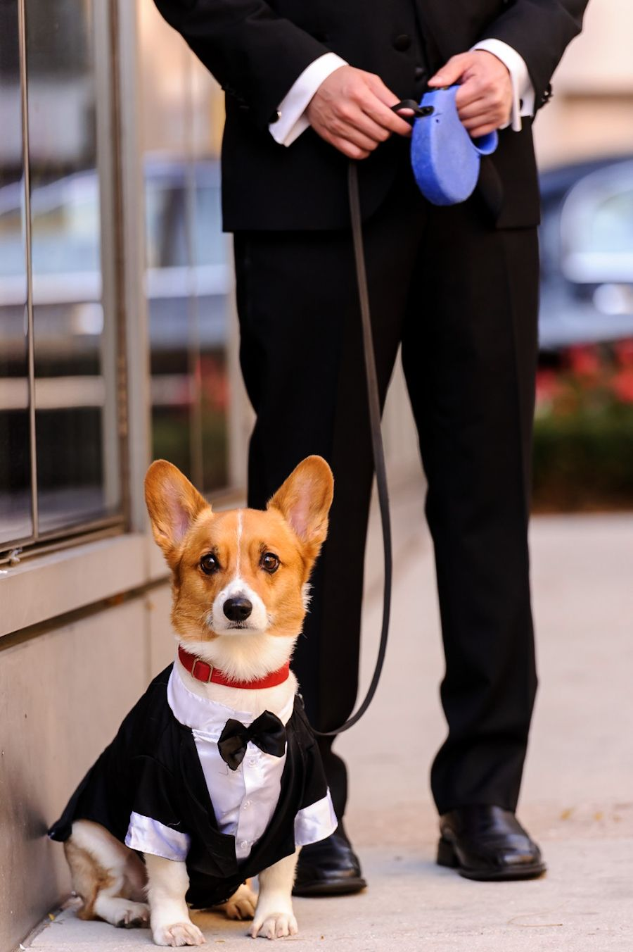 Modern Tribeca Wedding From Susan Stripling Corgi Dog Wedding Pets