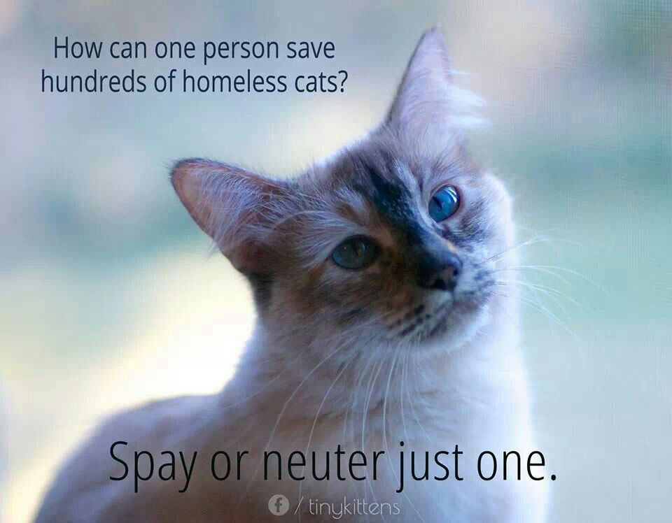 Please spay/neuter...it's vital and the most humane thing