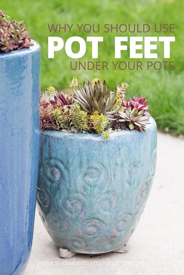 Use Pot Feet for Succulent Container Gardens is part of garden Tips Pots - If you haven't heard about pot feet, they just might be the best thing you can add to your succulent container gardens  Find out why they are so beneficial!
