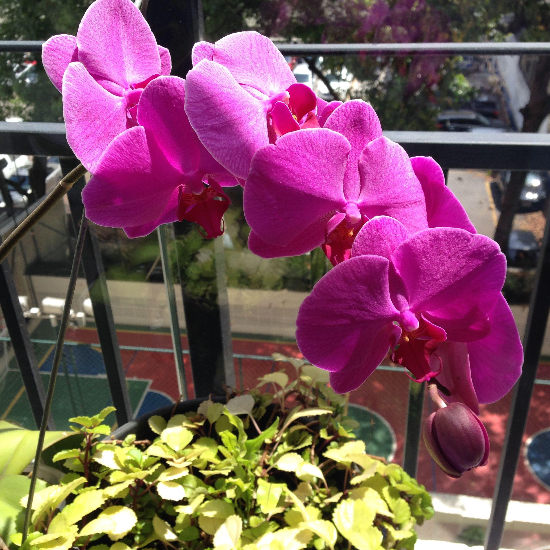 Orquideas em Sampa