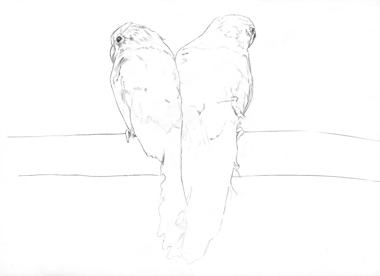 Graphite Lovebird Drawing Pencil Drawings Pinterest Drawings