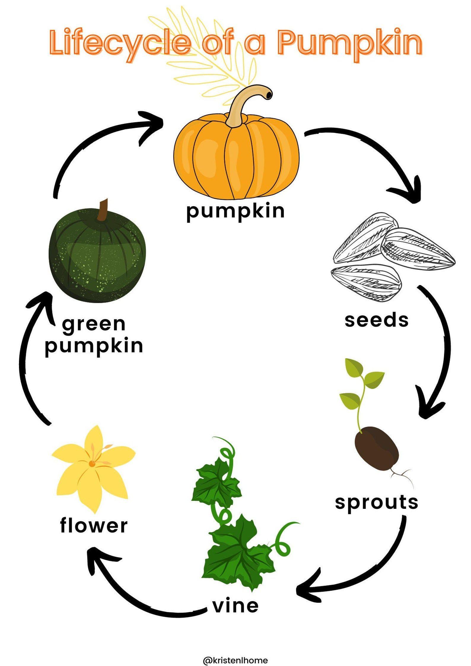 Lifecycle Of A Pumpkin Fall Unit Study Pumpkin Unit Study Etsy In 2021 Parts Of A Pumpkin Pumpkin Crafts Preschool Pumpkin Activities Preschool