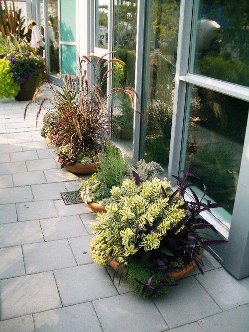 Echiverias Garden Wonder Pinterest - diseo de jardines urbanos