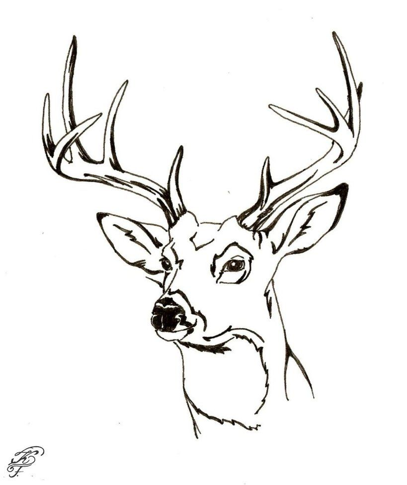 Whitetail Deer Head COLORING PAGES | hunting whitetail deer ...
