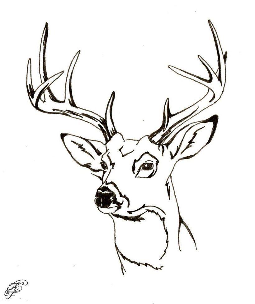 Odocoileus Virginianus By Speedyart D5oe6el Jpg 819 976 Deer Coloring Pages Animal Coloring Pages Deer Illustration