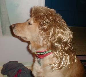 Poor Dog With This Mullet Hybrid Dogs Poor Dog Funny Valentine Memes
