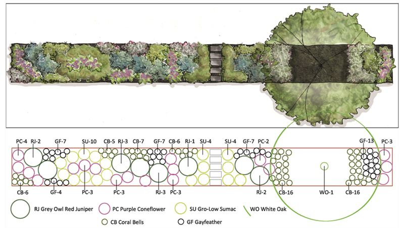 this simple design uses 5 plant species to support beauty  birds and butterflies  the plan view