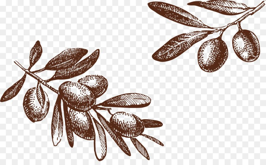 Olive Drawing Photography Illustration Olive Tree Png Is About Is About Food Organism Olive Dra Drawings Photography Photography Illustration Tree Support