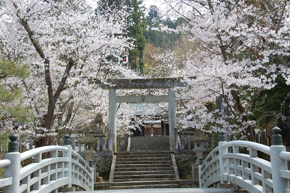 Pin By Mandy On Cherry Blossoms Garden Arch Outdoor Structures Outdoor