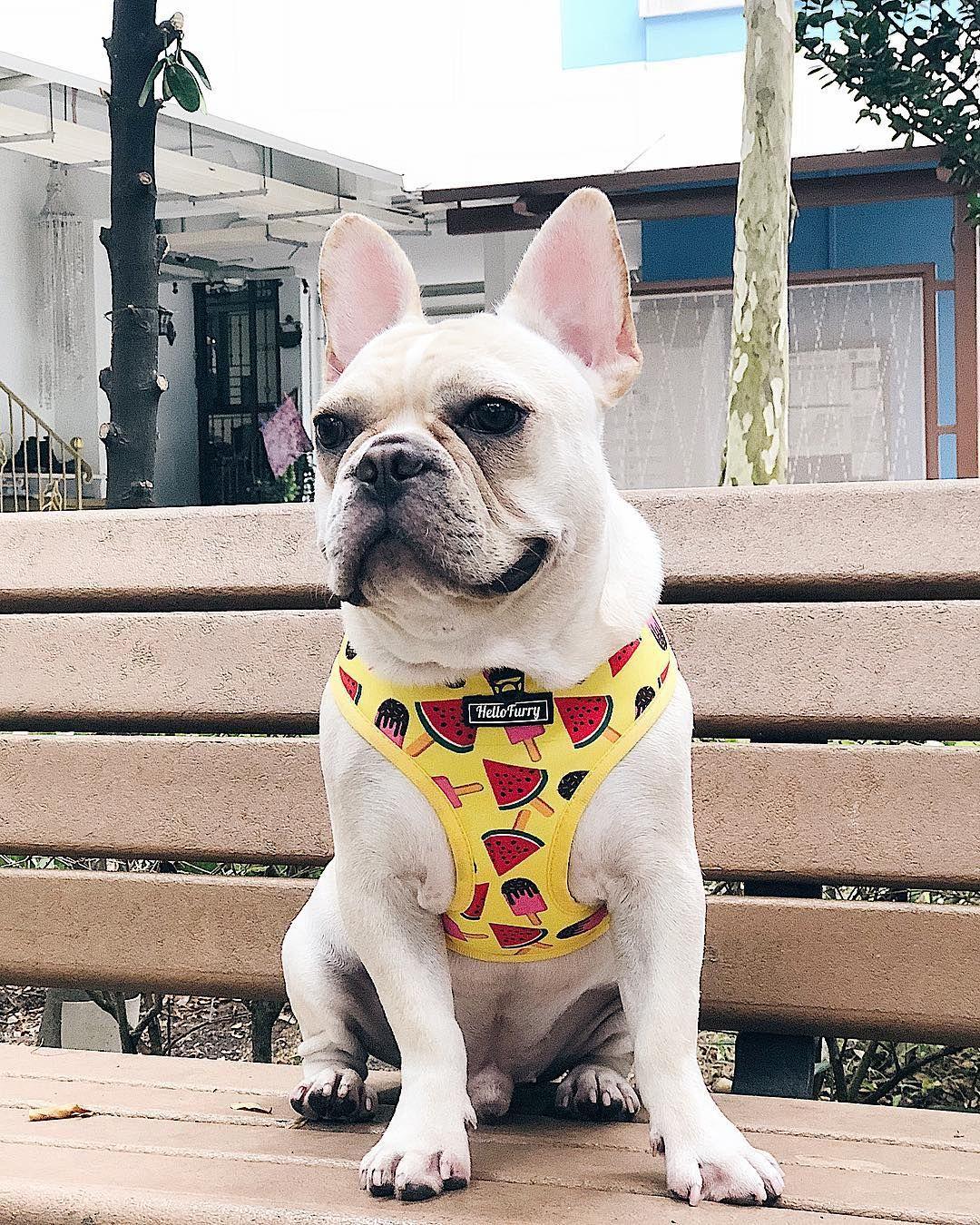 Pin By Hellofurry On Dog Harness Collar Leash Dog Harness Pet
