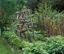 lush veggie bed