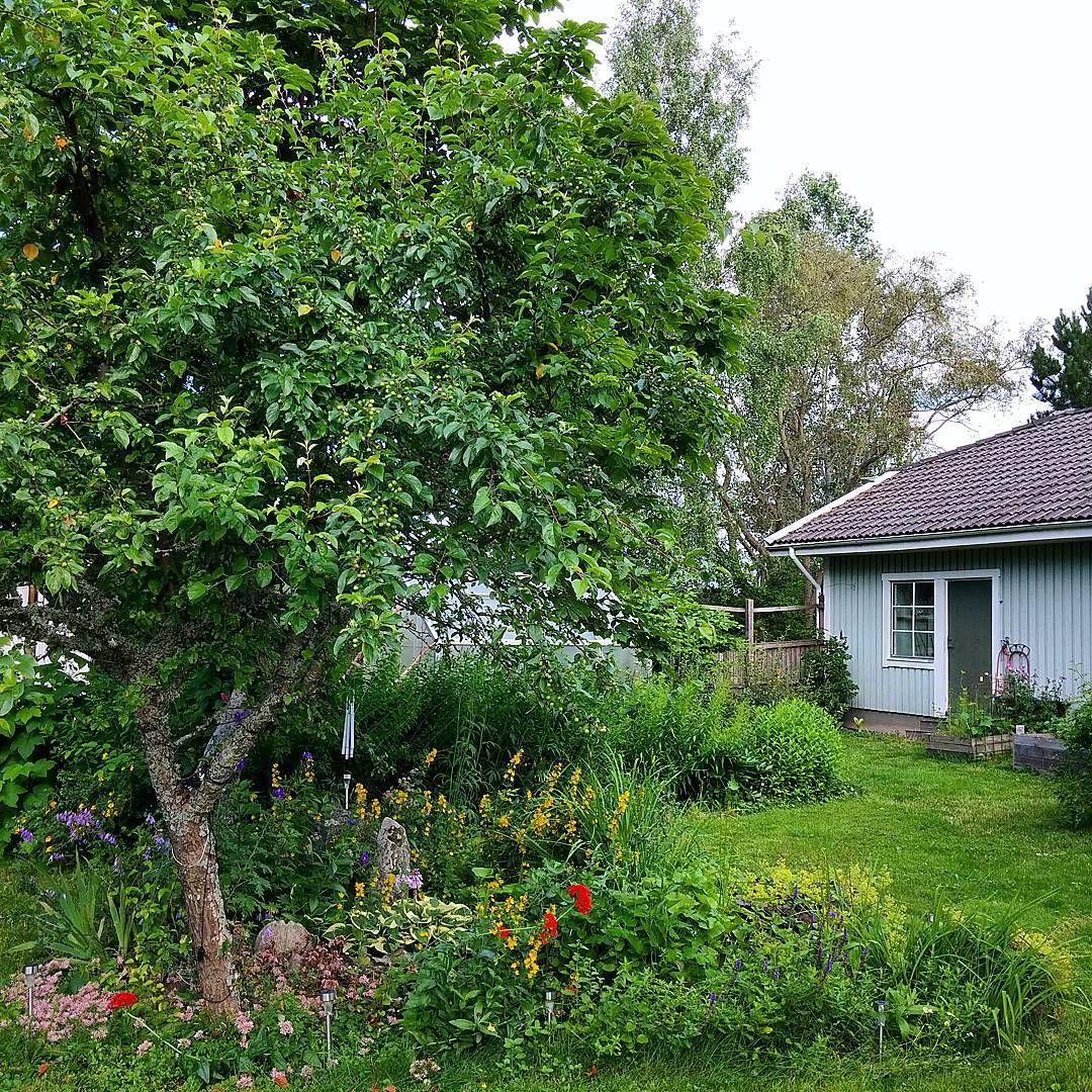 The #garden #trädgård #have #hage #jardin #giardino #sweden #sverige #nordic #micmarmik #summerinsweden #augusti #august