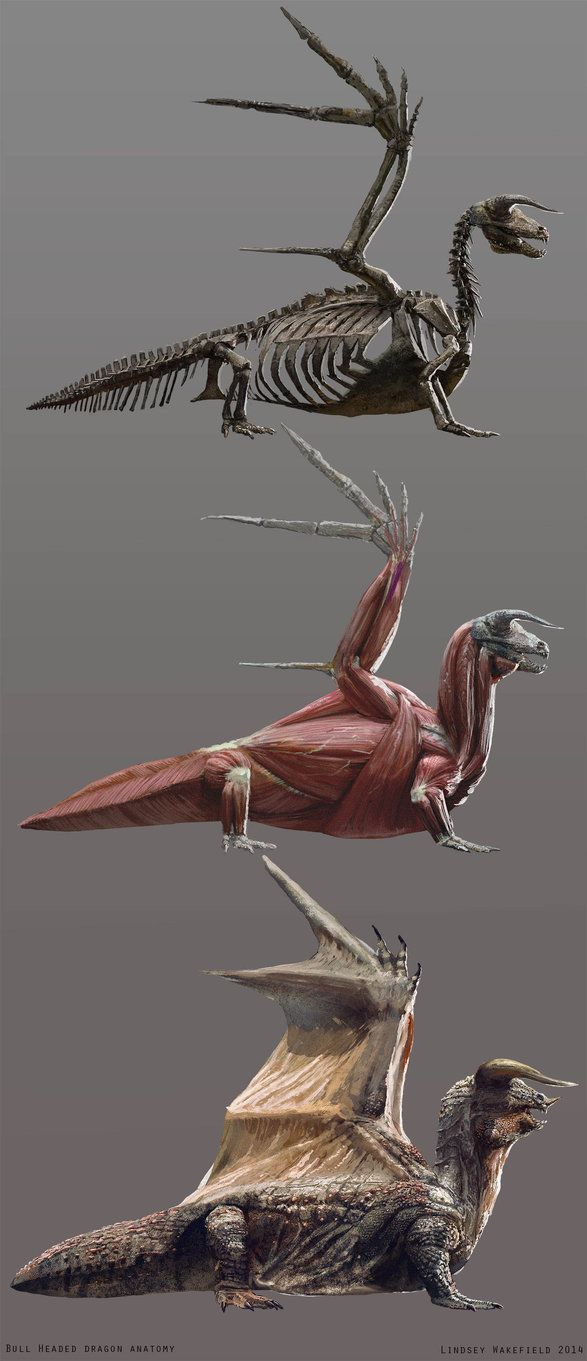 Image result for Komodo Dragon anatomy | Dragons | Pinterest ...