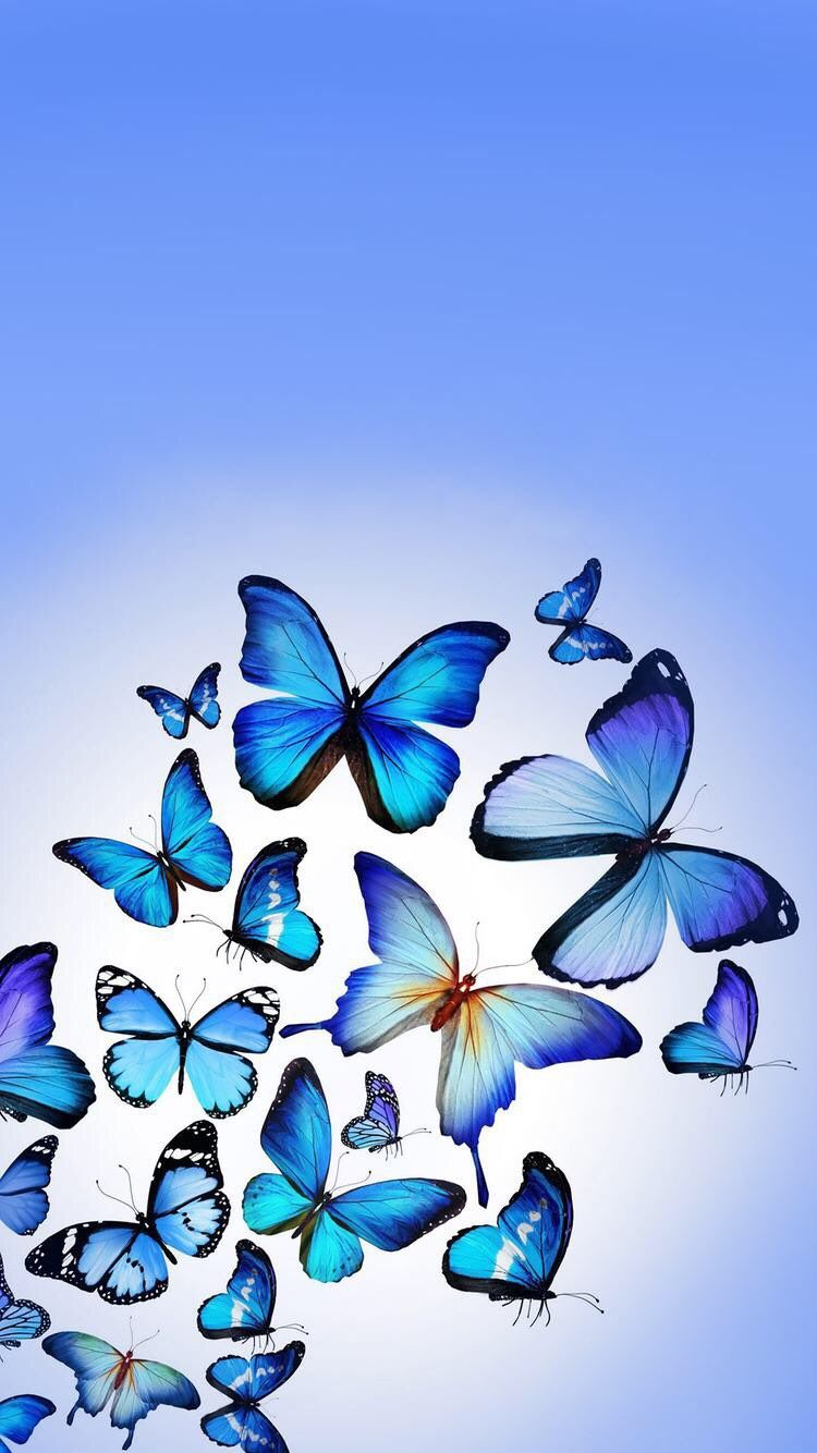 Iphone And Android Wallpapers Blue Butterfly Wallpaper For Iphone And Android Butterfly Wallpaper Iphone Blue Butterfly Wallpaper Wallpaper Nature Flowers