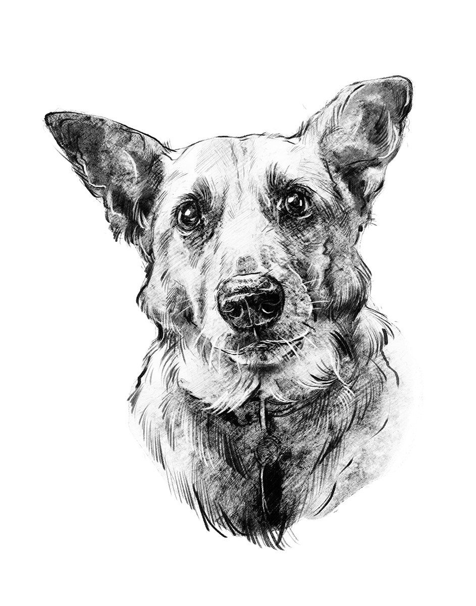 Cute Pencil Dog Art