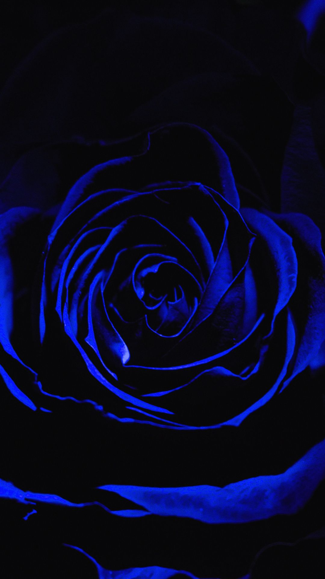 Rose, Blue, Black, Flower Wallpaper for Android [Full HD], 1080x1920 Flowers Background and Image