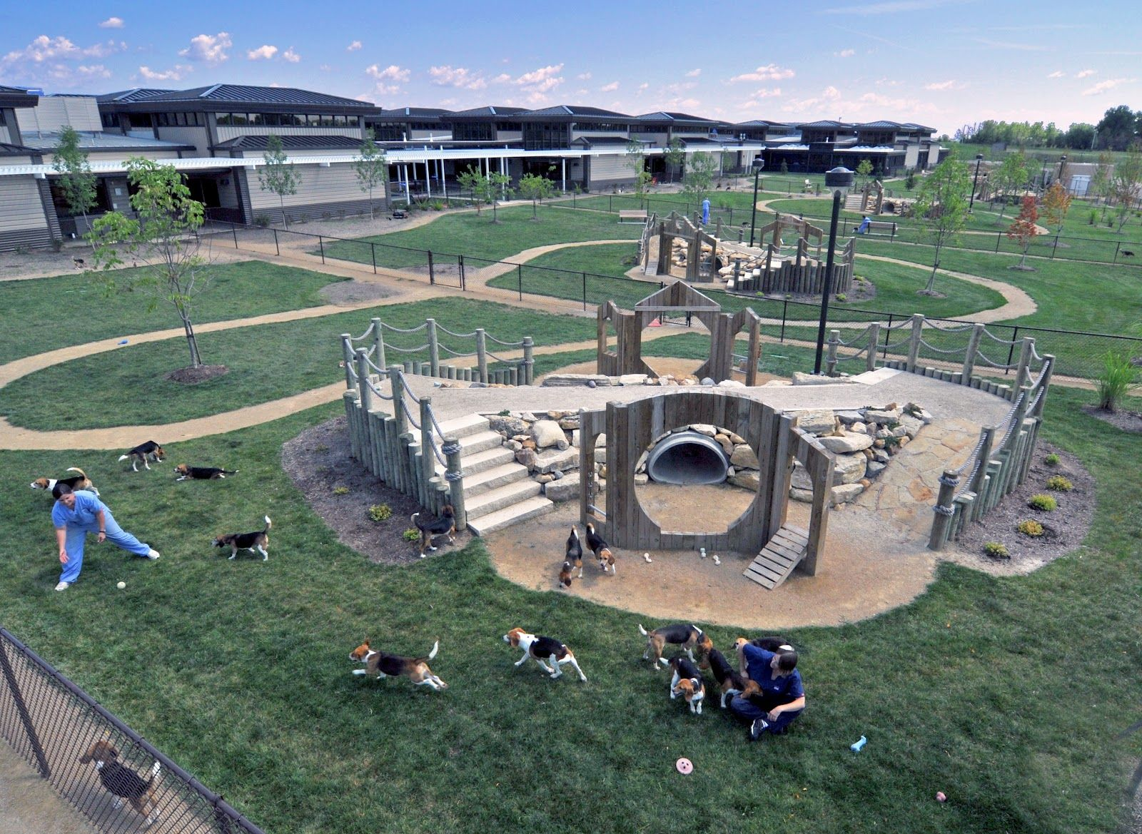 Dog Play Area Ideas Dogs Looked Happy And Healthy Too With Multiple Dog Park Play Areas Dog Playground Indoor Dog Park Dog Park