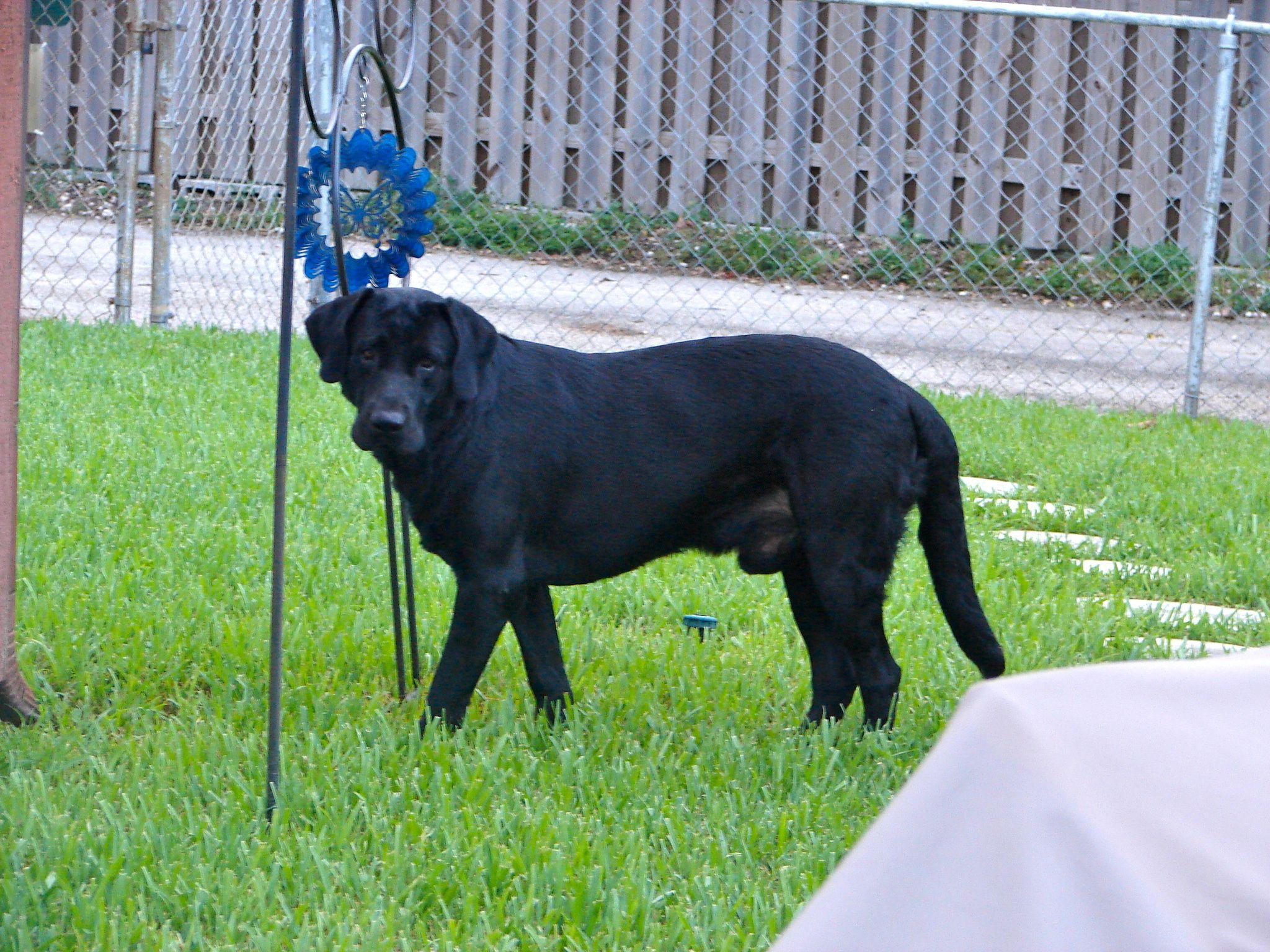 Exploring his yard.
