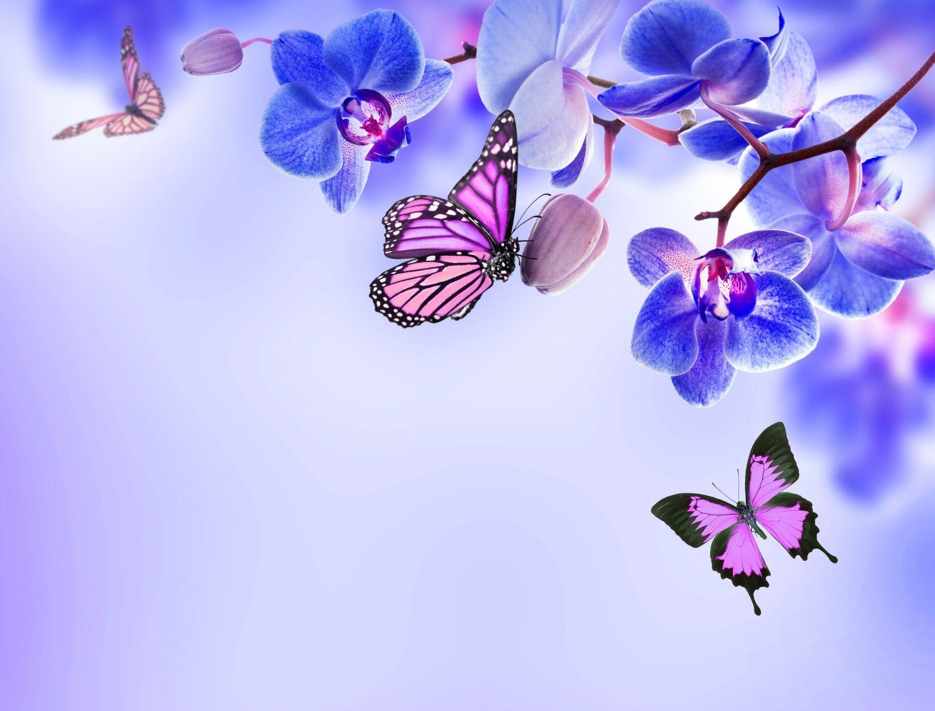Orchid Blue Flowers Beautiful Butterflies Flower Butterfly Hd Wallpaper Orchid Wallpaper Butterfly Wallpaper Hd Flower Wallpaper