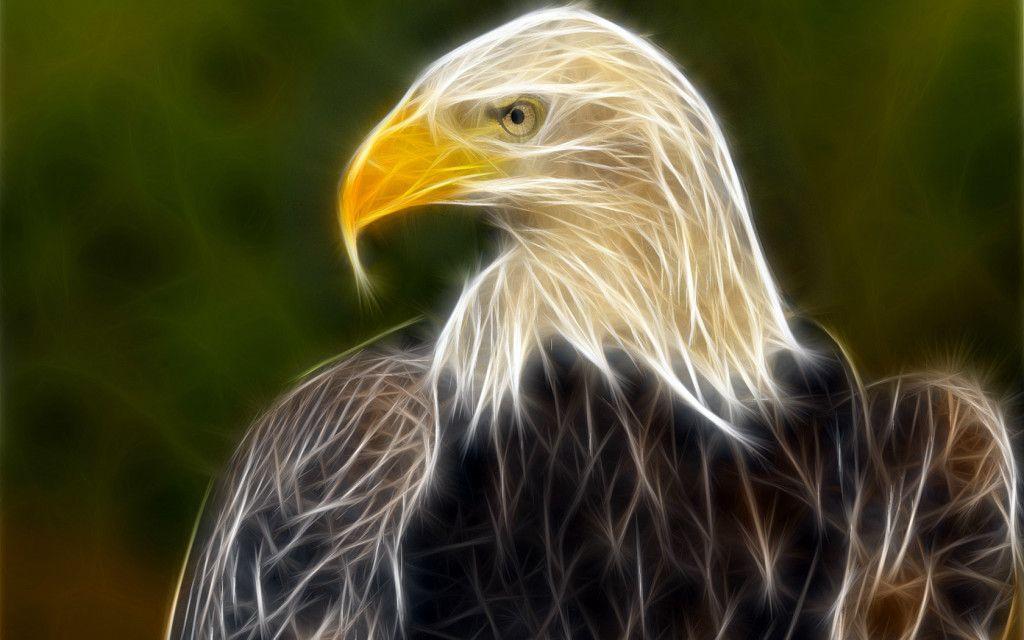 3d Eagle Wallpaper Animal Wallpaper Birds Wallpaper Hd Eagle Animals Cool eagle wallpaper 3d