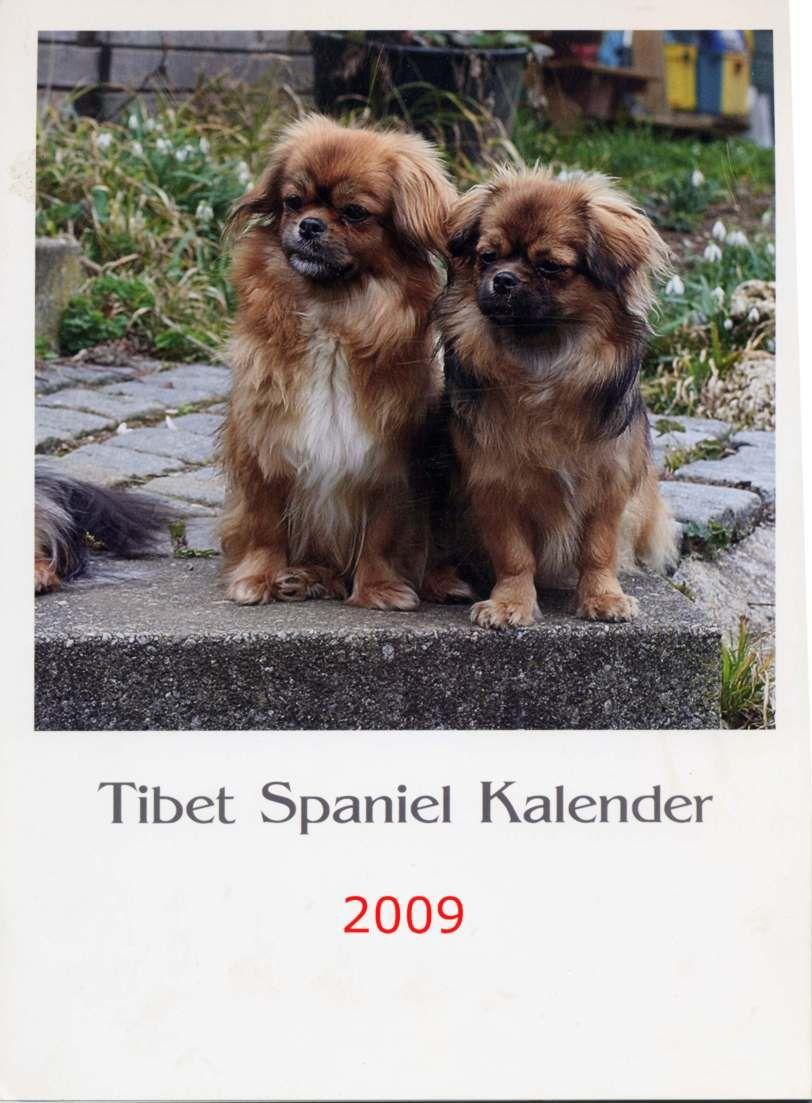 Tibetan Spaniels Pekingese dogs, Spaniel
