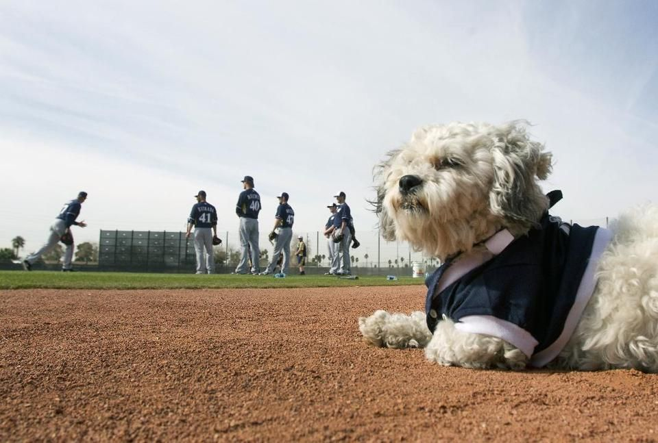 Stray Dog Hank Becomes Big Hit In Brewers Camp Dogs Milwaukee