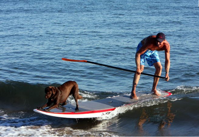 there is nothing more thrilling than surf SUP with your dog! #surf #sup stand up paddle surf www.paddlesurfwarehouse.com