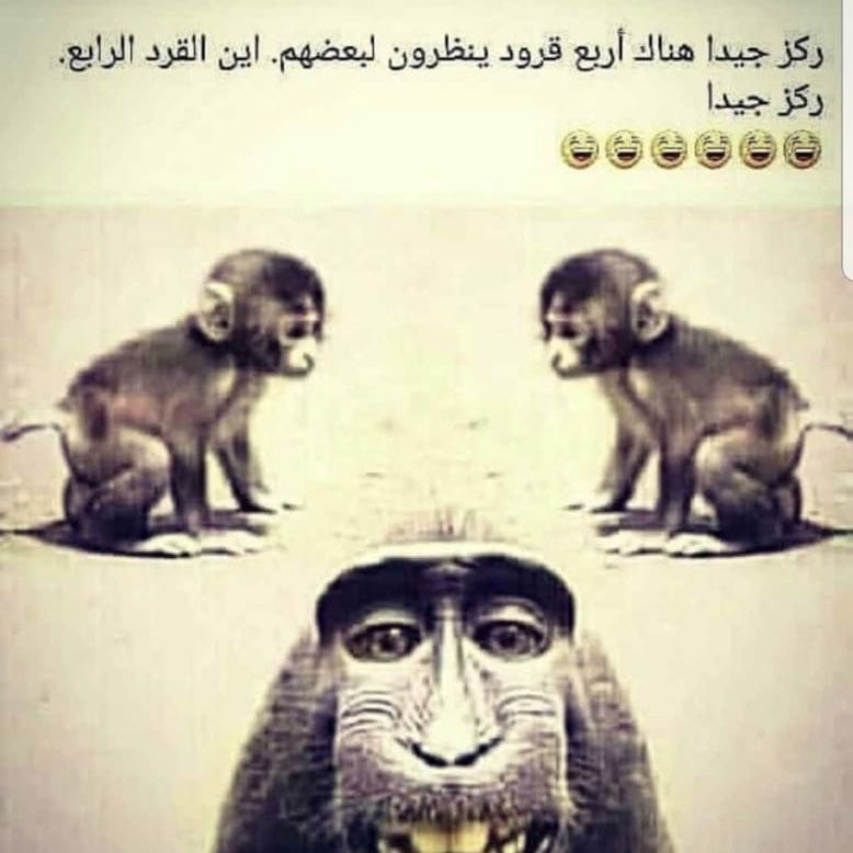 Pin By Malak On Jokes And Humor Monkey Face Beer Nerd Funny Memes
