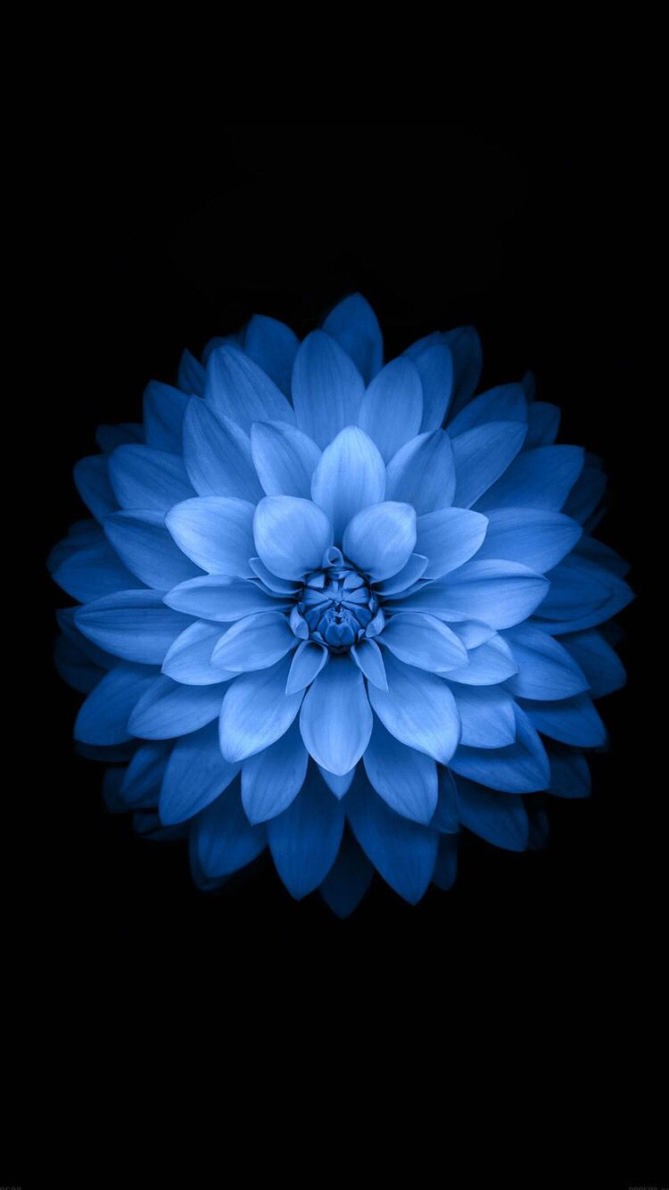 Blue lotus be creative 01 pinterest lotus wallpaper and flowers blue lotus izmirmasajfo