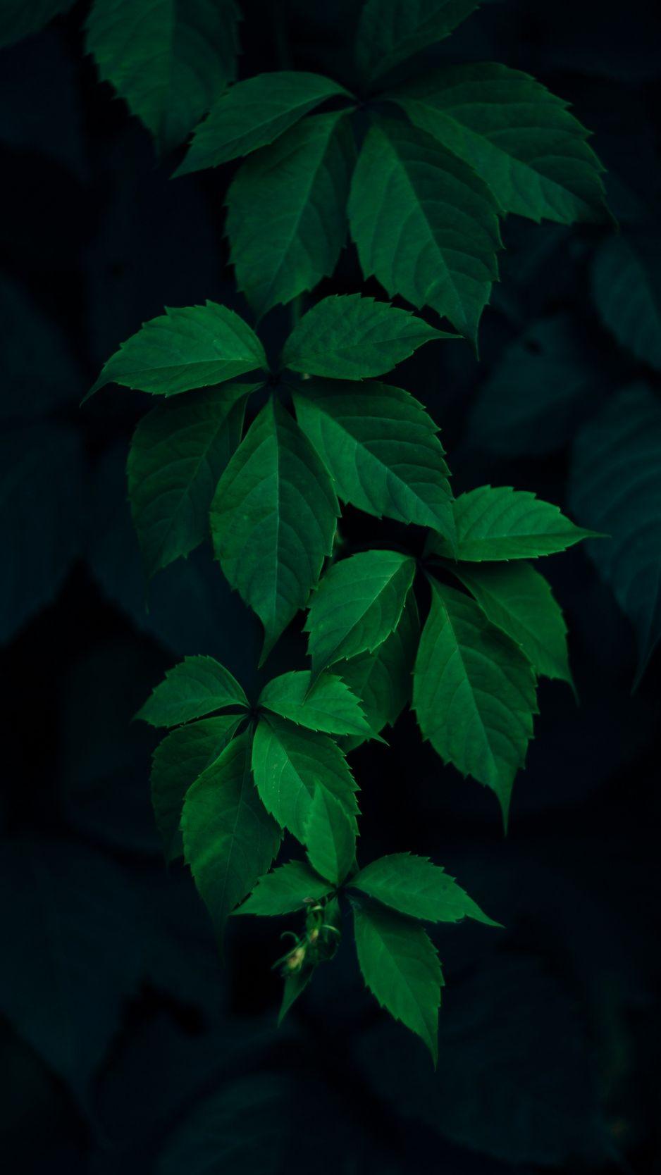 938x1668 Wallpaper Leaves Green Branches Dark Background Fotografi Alam Fotografi Seni Latar Belakang