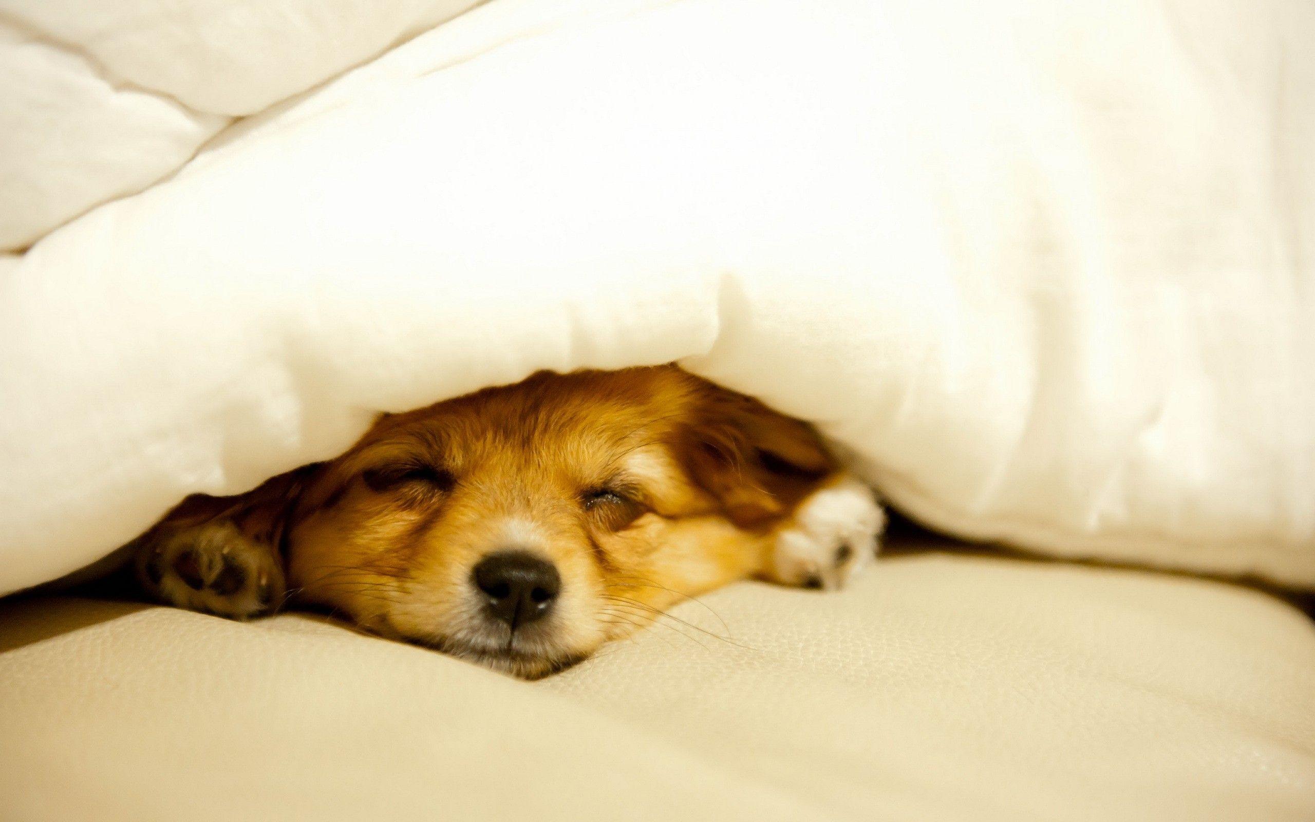 Cute Sleeping Dog Sleeping Dogs Puppies Puppy Blanket