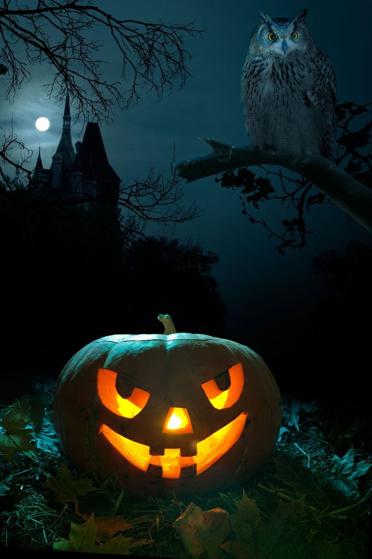 Photography Backdrop Pumpkin Castle Owl Halloween