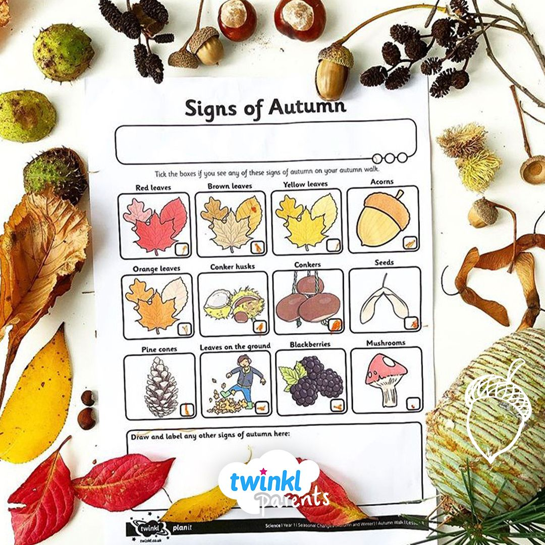 It's a beautiful autumn day here at Twinkl Parents HQ. How many signs of autumn can you find? Th…   Autumn activities, Autumn activities for kids, Pine cone drawing