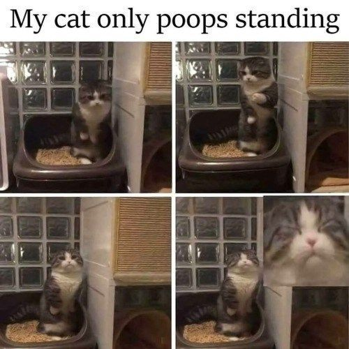 Cat Memes That will Have You Giggling For Days 19 Cat Memes That will Have You Giggling For Days19 Cat Memes That will Have You Giggling For Days