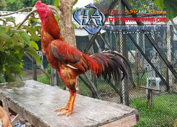 Pin Di Chickens