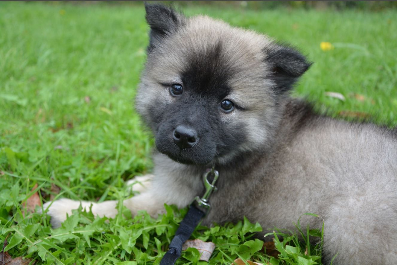 Jessica Young On Cute Puppy Names Miniature Puppies Puppy Names
