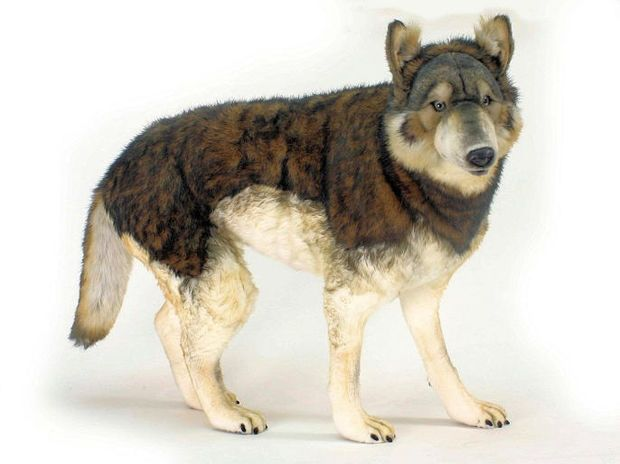 Wolf Wolves Luxury Lifesize Life Size Life Like And Realistic