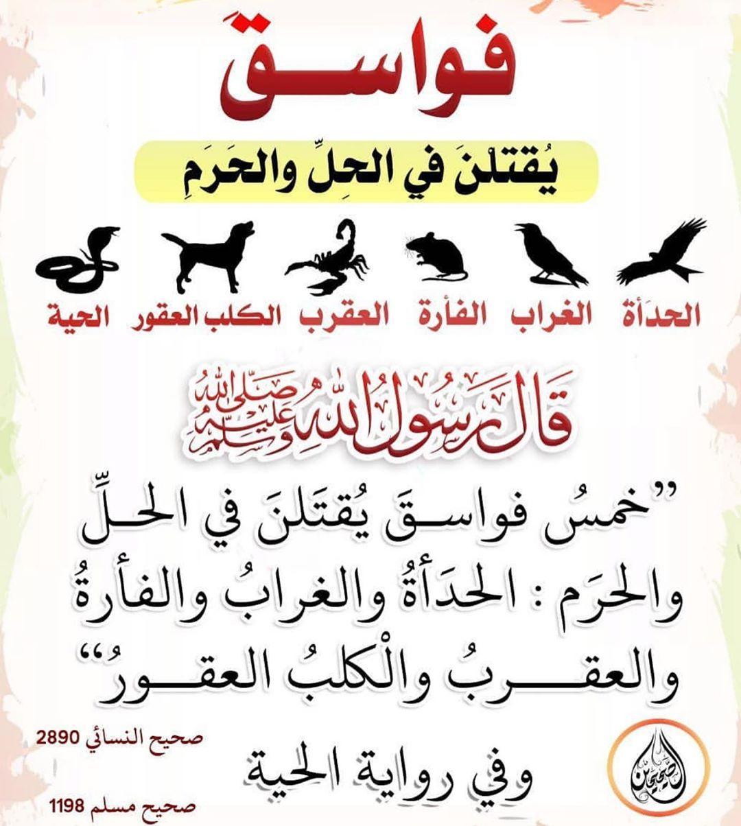 362 Likes 13 Comments السـلـف الـصـالـح Mnhg Alsalf Alsalih On Instagram Islam Quran Instagram Posts Instagram