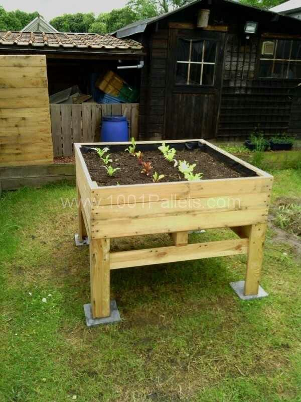 Used pallets transformed into a raised garden bed.