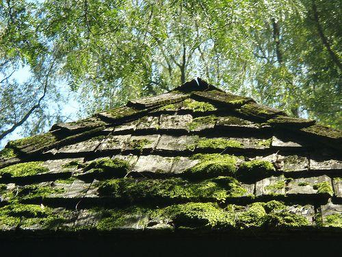 lichen+on+cedar+shake+roof