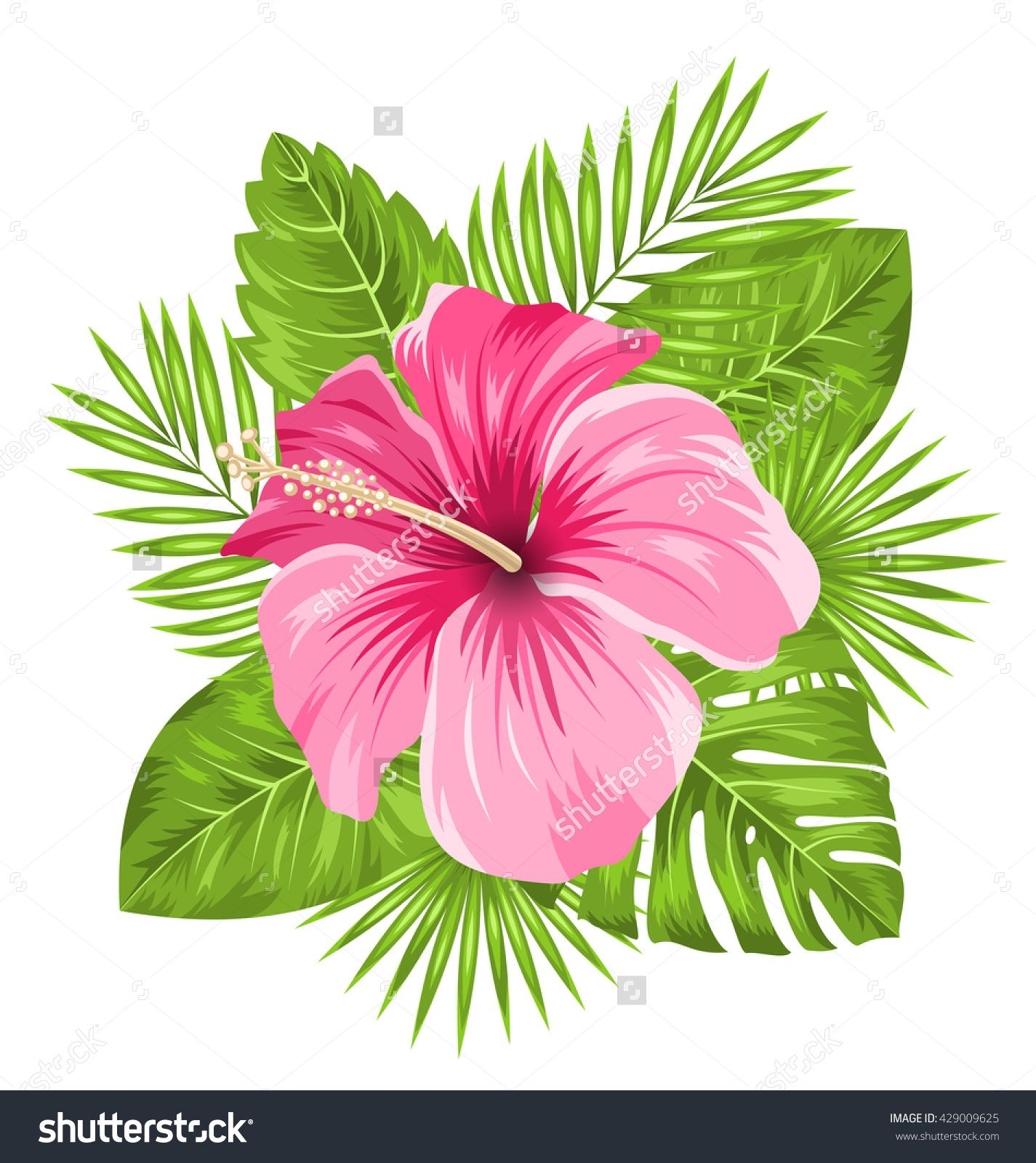Illustration beautiful pink hibiscus flowers blossom and tropical illustration beautiful pink hibiscus flowers blossom and tropical leaves isolated on white background raster izmirmasajfo Images