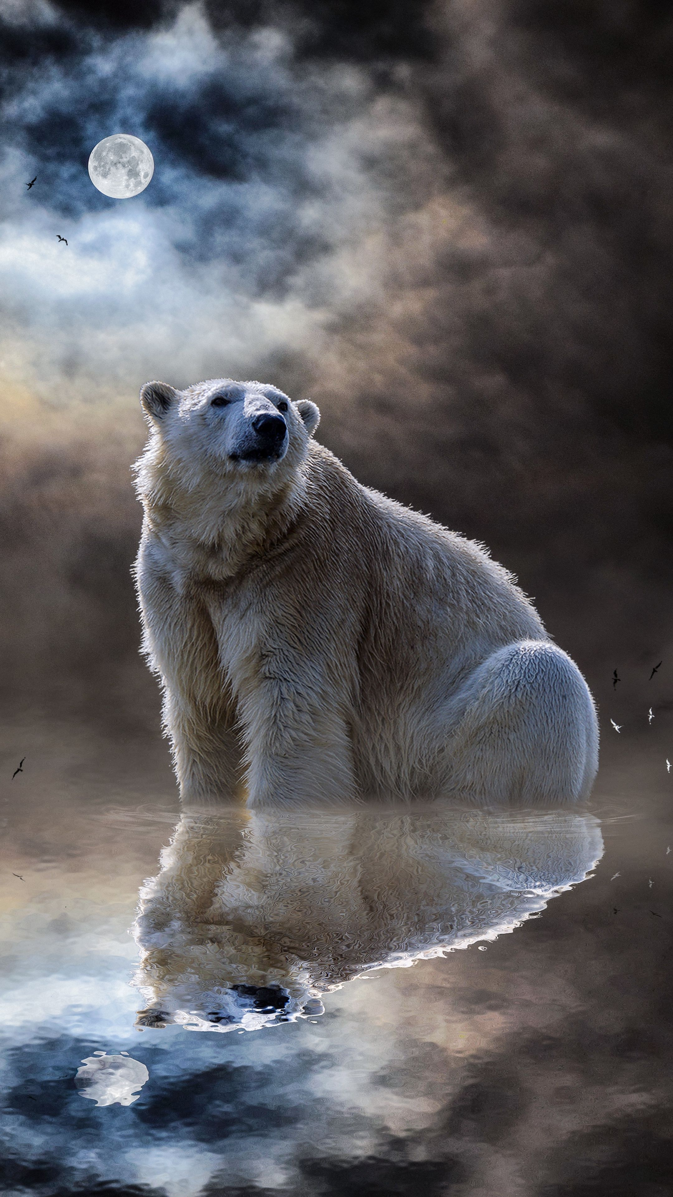 Animals polarbear ocean reflection wallpapers hd 4k