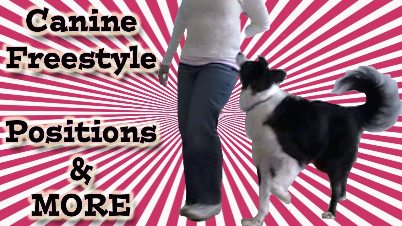 Canine Freestyle Heel Work To Music Clicker Training Dog