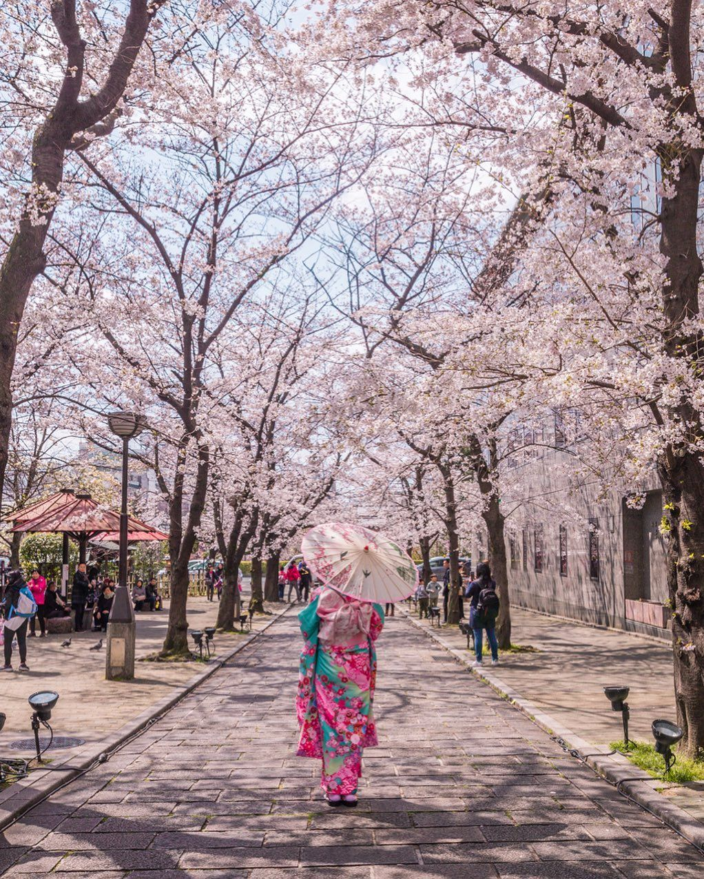 Cherry Blossoms In Gion District Kyoto Hermosos Paisajes Fotos Artisticas Paisajes