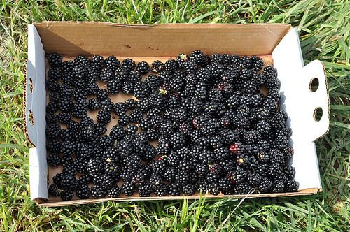 blackberries jam  Great site for canning recipes