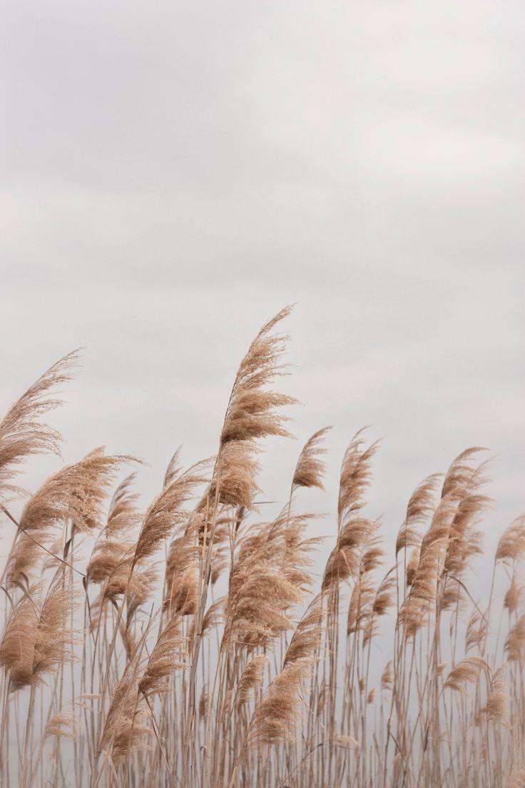 Beach Photography, Beach Grass, Wall Art, Digital