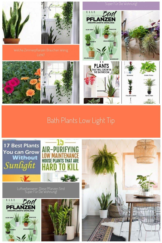 Bath Plants Low Light Tips 59 Best Ideas Bath Ideas Light Plants Rooms Badezimmer Pflanzen Wenig Licht Badezimmer Pflanzen Wenig Licht In 2020