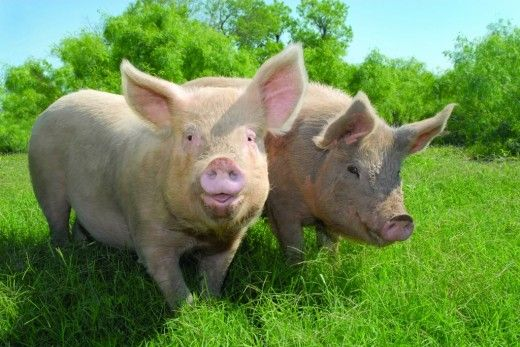 Victory! More 'Ag-Gag' Bills Defeated