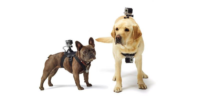 Gopro S Fetch Harness Lets You Capture The World From A Dog S