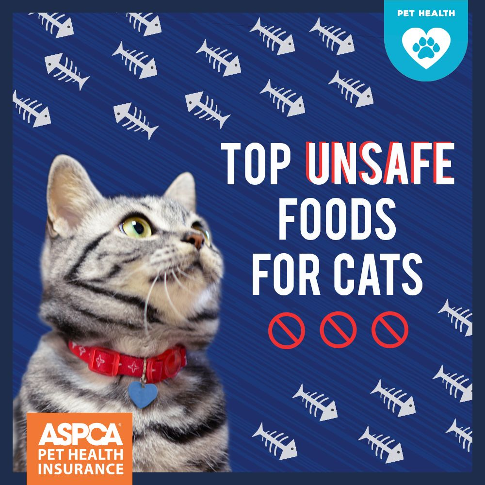 Top 10 Unsafe Foods for Cats Dog insurance, Pet health